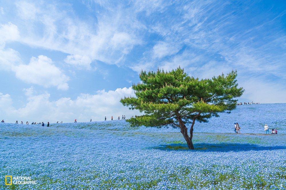 ng-blue-universe
