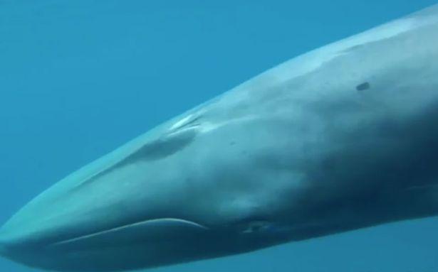 Omuras-whale5