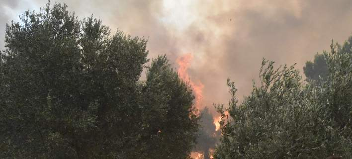 Πολύ υψηλός ο κίνδυνος πυρκαγιάς σήμερα -Δείτε σε ποιες περιοχές